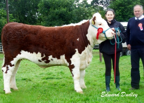 Reserve Supreme Hereford Champion Kilsunny Lass Lily with Susan Dudley (handler) and Tommy Beirne (judge)