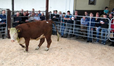 €4,500 Allowdale Pansy 526 - K Marigan
