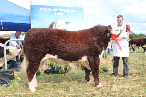 Winner Jan – June bull class Corlismorepoll 1 Lad with Garry McKiernan
