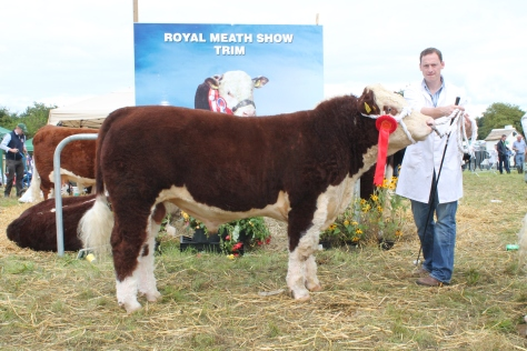 Winner July – Oct bull calf class Grianan Prince with Anselm Fitzgerald