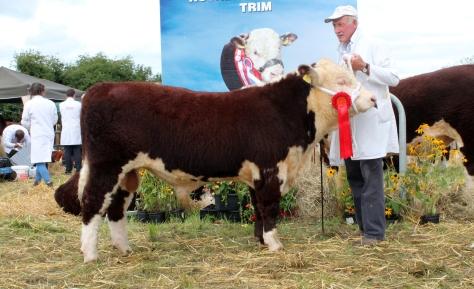 12-1st-nov-bull