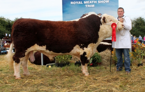Winner Senior bull class Glaslough Karl with Nigel Heatrick