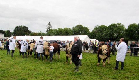 Judge John Neenan gives all animals in the line-up careful consideration