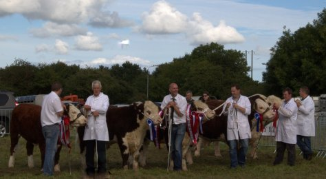 The top Herefords line up to represent the breed