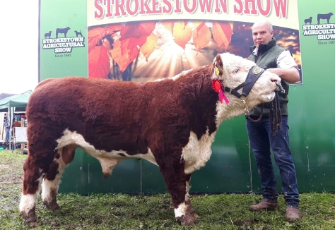 Reserve Champion Moyclare Oliver with Michael Molloy