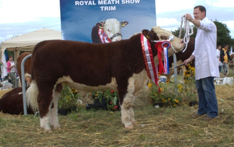 Champion bull calf Grianan Prince with owner Anselm Fitzgerald