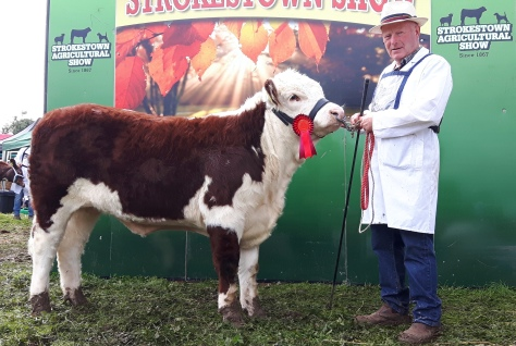 Kye Holly winner junior heifer class with Padraig McGrath
