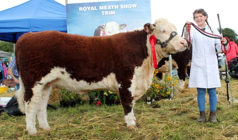 Winner cow or heifer class Ardmulchan Clover 610 with Catherine Smyth