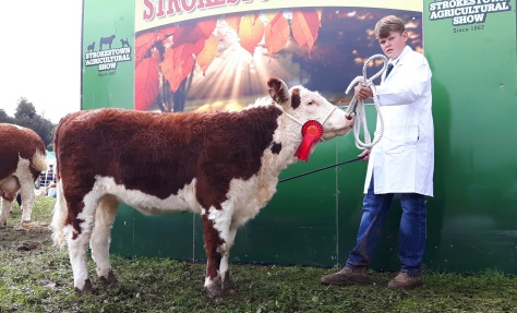 Hillockpoll 1 Michela winner heifer calf class with Mark Hyland