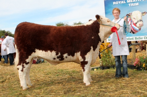 Winner yearling heifer class Kilsunny Lass Lily with Edward Dudley