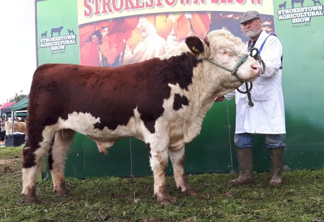 Winner senior bull class Baltymore Rodge 454 with Coote Geelan