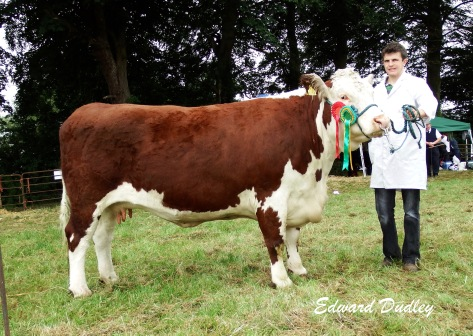 Reserve Hereford Champion Lakelodge Kathy 5 with Glenn Dudley (exhibitor)