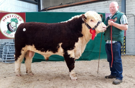 The top price €5,600 was paid by John and Darren Hayes, Tankardstown, Ratoath, Co Meath for Kye Harry 721 Pictured with breeder Padraig McGrath