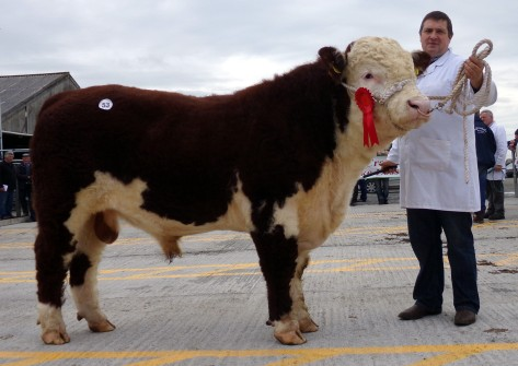 Glaslough Rocky with owner Nigel Heatrick - €3,000