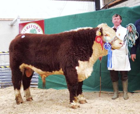 Reserve Champion Beaghmore Romeo 2 bred by Margaret and Leila McCabe €4,150 - pictured with neighbour and friend John Morrow