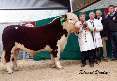 Cill Cormaic Napoleon €4,500 - Pictured with Joey and David Larkin with purchasers Glenn Jacob & John Johnston