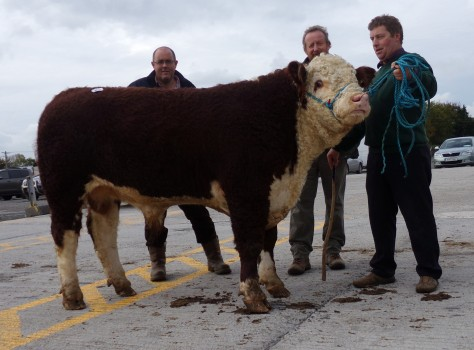 Ballinveney Repose pictured with purchasers John Canty and Tom Brennan also breeder Rory Farrell - €2,850