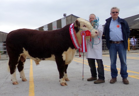 Champion Cill Cormaic Nevada with owner David Larkin and show judge Liam Philpott