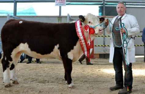Champion Female Cill Cormaic Niamh €3,500 - with David Larkin