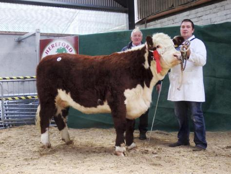 Glaslough Pepsi - €3,000 pictured with show judge John Holloway and owner Nigel Heatrick