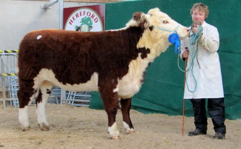 Cill Cormaic Natasha €2,900 pictured with Joey Larkin