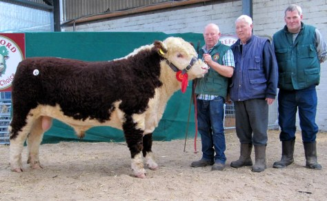 Kye Harry 721 - €5,600 with Padraig McGrath and purchasers John and Darren Hayes - Curraghliffe Herd, Tankardstown, Ratoath, Co Meath