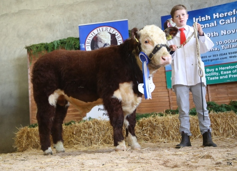 Reserve Junior Male Champion Clouncagh Perfection with Jack O'Connor