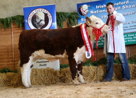 Junior Female Champion Corlismore Betty 843 with Gary McKiernan