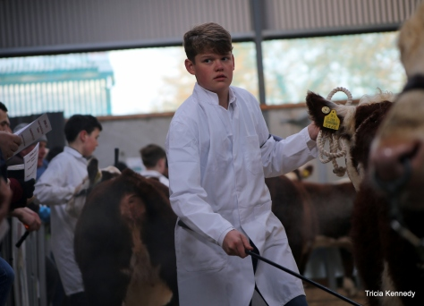 Winner Young Handler under 14 - Mark Hyland, Corawallen, Carrigallen