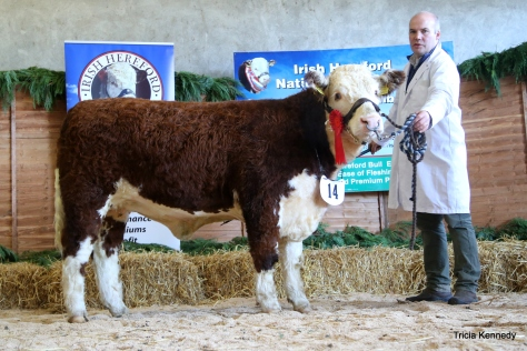 Winner September-October '15 born heifer Moyclare Rose with owner Michael Molloy