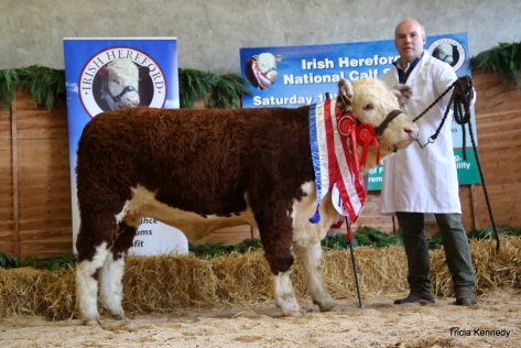 Supreme and Senior Female Champion Moyclare Rose with owner Michael Molloy
