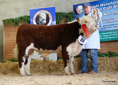 Winner Bull born after March '16 with John McKiernan