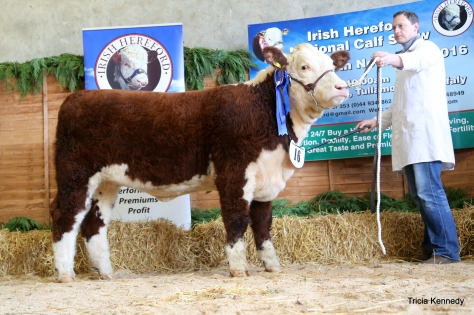 Reserve Supreme and Reserve Senior Female Champion Grianan Orange P752 with owner Anselm Fitzgerald