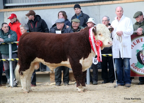 Senior Male Champion Riverrock Goldstar with owner Tony Hartnett