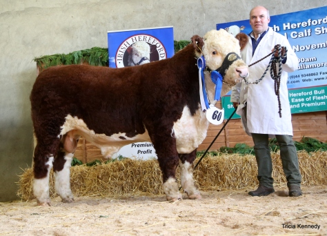 Reserve Senior Male Champion Moyclare Oliver with Michael Molloy