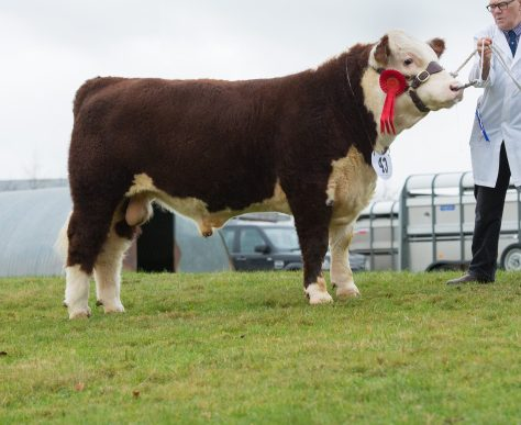Grand Male Champion Haven Neptune with Haven stockman Mike Chandler
