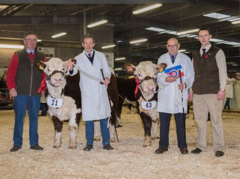 L to R, Breed President Michael Clark, with Haven Northstar, breeder Edward Lewis, Haven Neptune Stockman Mike Chandler and Show Judge John O'Connor