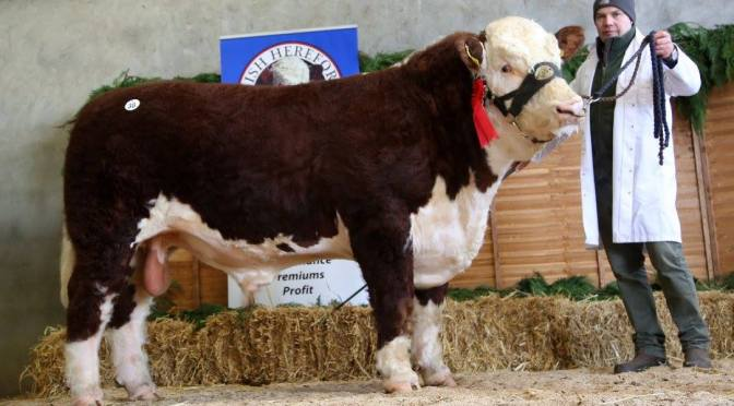 €5,200 TOPS THE HEREFORD PREMIER SPRING SHOW & SALE AT TULLAMORE