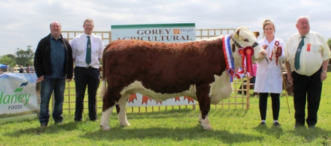Slaney Foods International the Major Hereford Sponsor at Gorey Agricultural Show