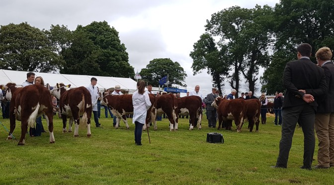 Paul & Vincent Sponsorship attract large numbers to Longford Show