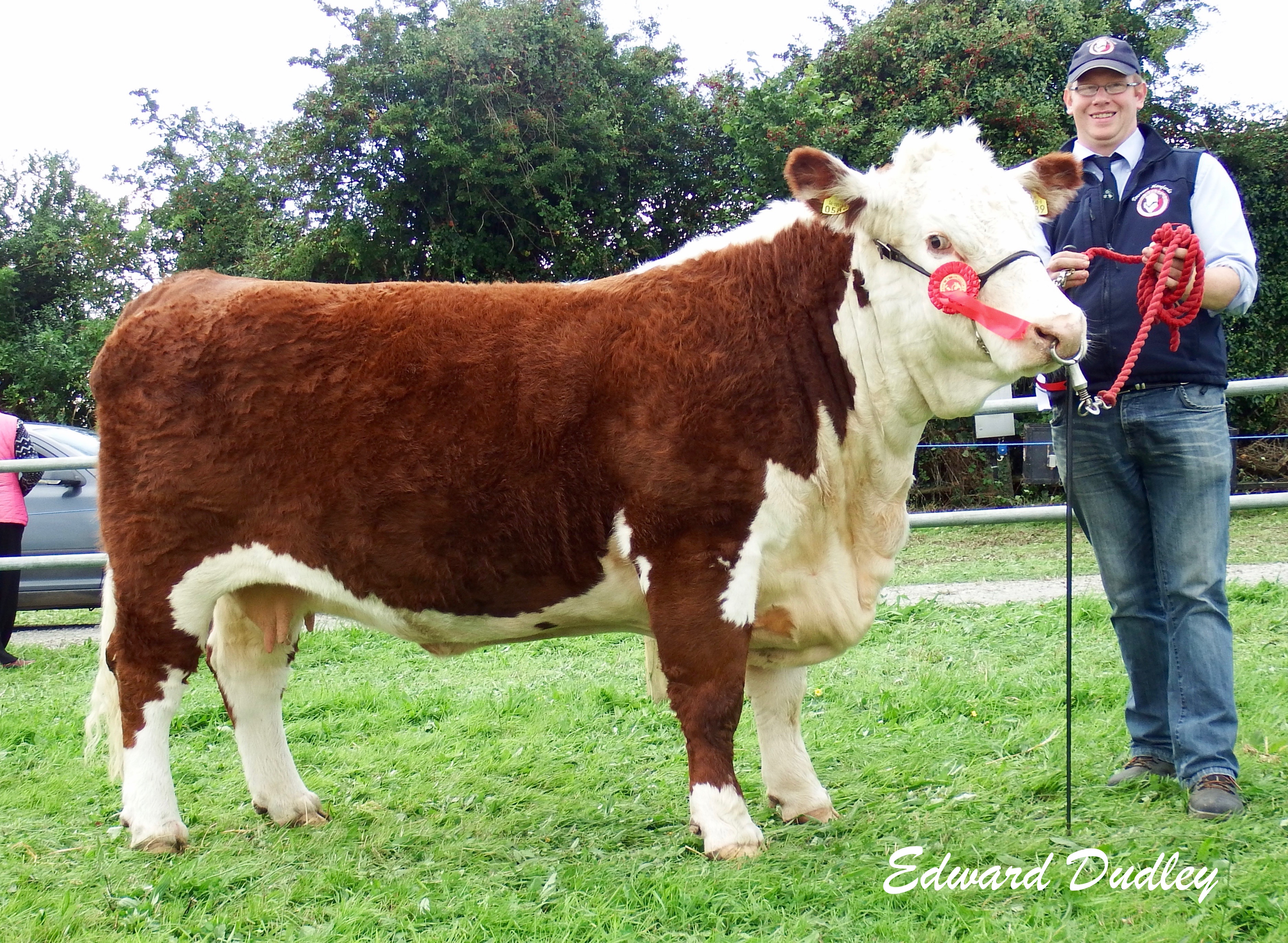 Reserve Hereford Champion, Grianan Orange 589 with Mervyn Parr