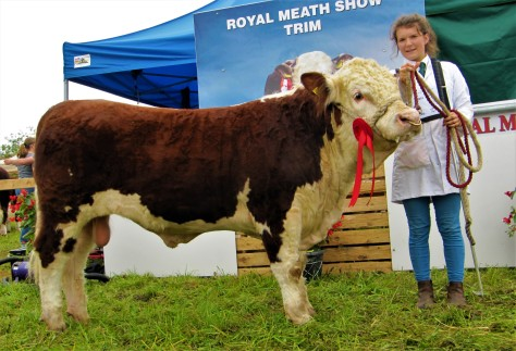 13 Ardmulchan Northern Winner July to October 2016 Bull calf class pictured with Catherine Smyth