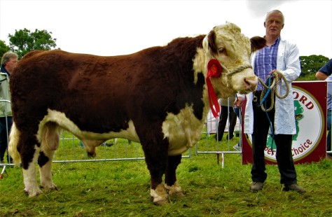 14 Winner senior bull calss Blackwater Master with owner Thomas Plunkett, Castletown Finea