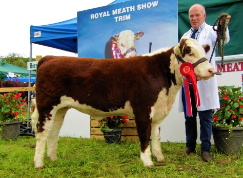 3 Champion Junior Heifer Calf Moyclare Piscies with owner Michael Molloy