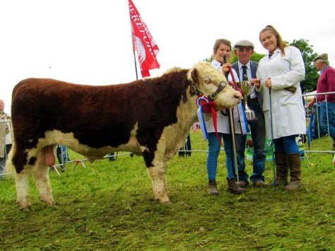 5 Champion Junior Bull Calf Ardmulchan Northern with Catherine & Philip Smyth