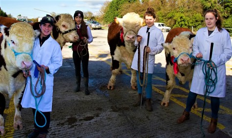 GVM Irish Hereford Society Bull Show & Sale Oct 27th 2017
