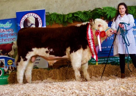 Dudley Calf champion