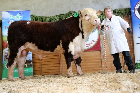 Cill Cormaic Ocean owned by David Larkin sold for €3,500 . Shown by Joey Larkin
