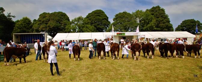 Big Prize Money Brings Big Crowds to Longford