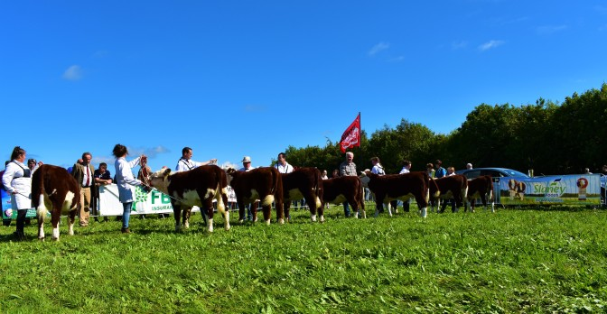 78th Royal Meath Show